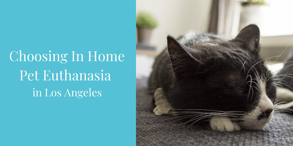 In Home Pet Euthanasia in Los Angeles