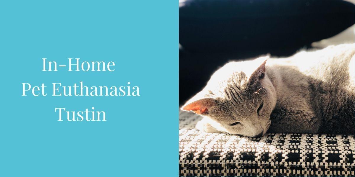 In-Home-Pet-Euthanasia-Tustin