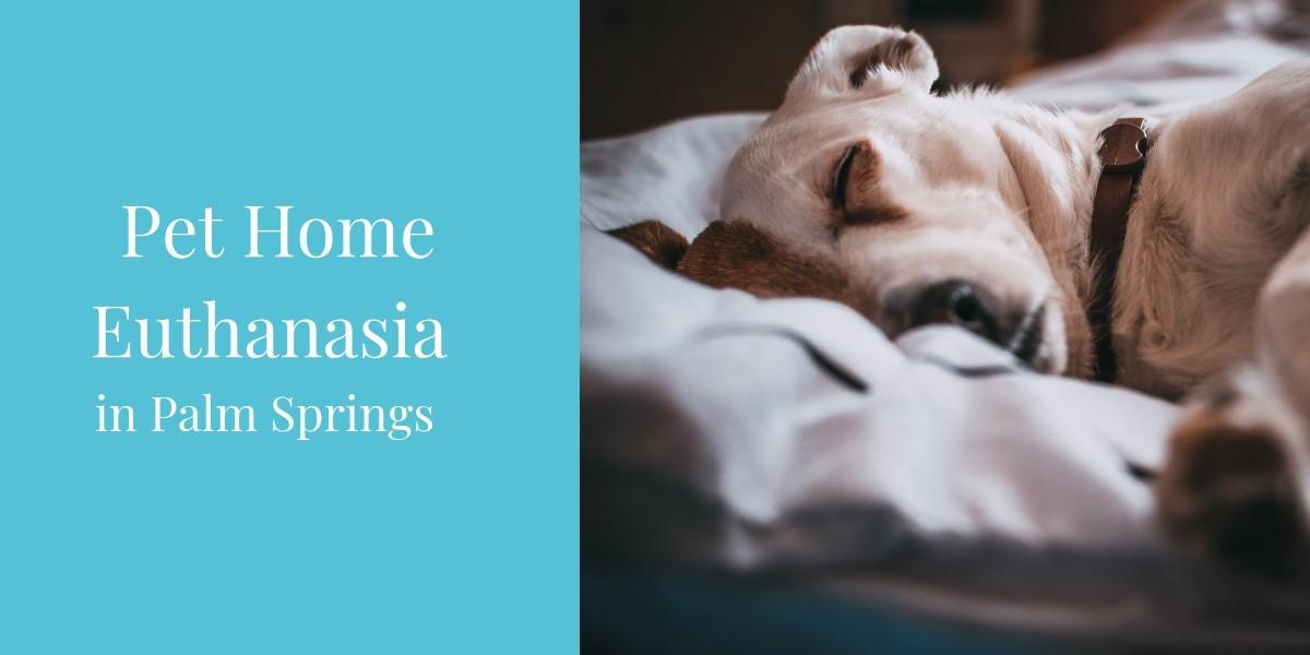 Pet-Home-Euthanasia-In-Palm-Springs