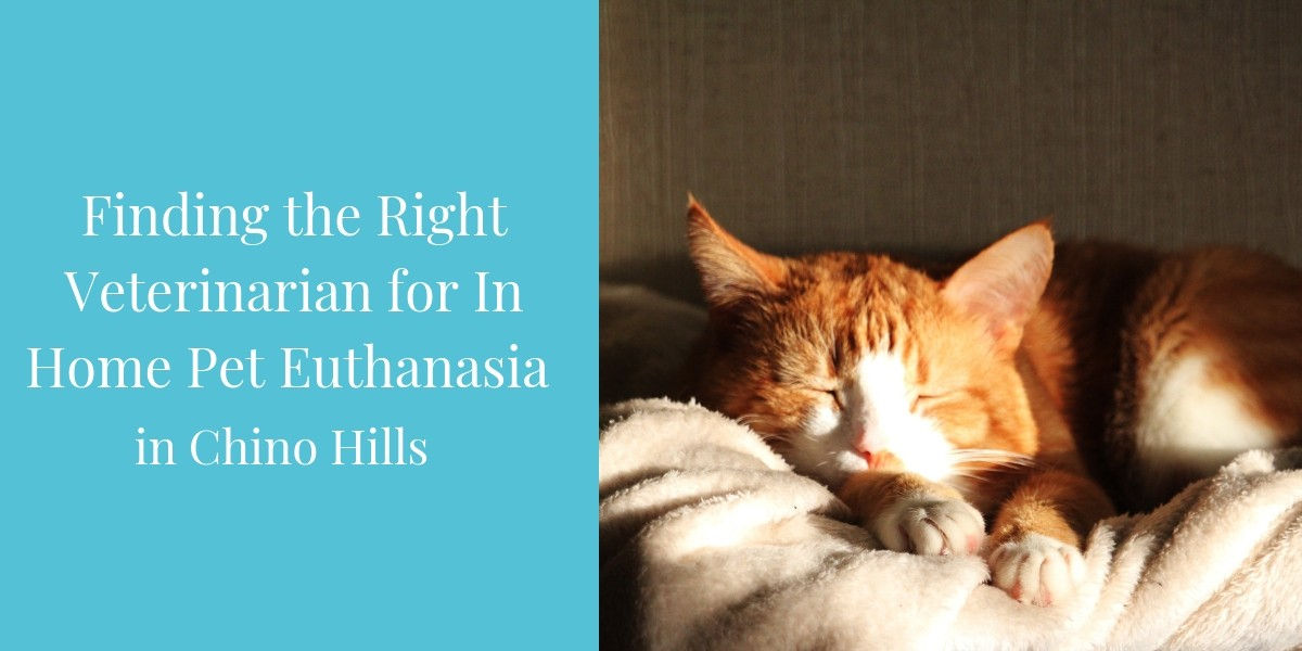 Finding-the-Right-Veterinarian-for-In-Home-Pet-Euthanasia-In-Chino-Hills