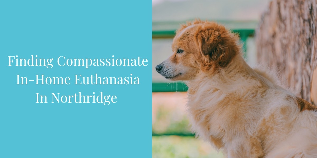 Finding-Compassionate-In-Home-Euthanasia-in-Northridge
