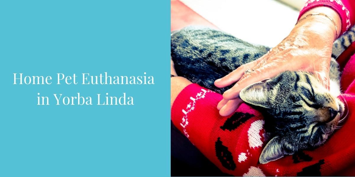 Home-Pet-Euthanasia--in-Yorba-Linda-